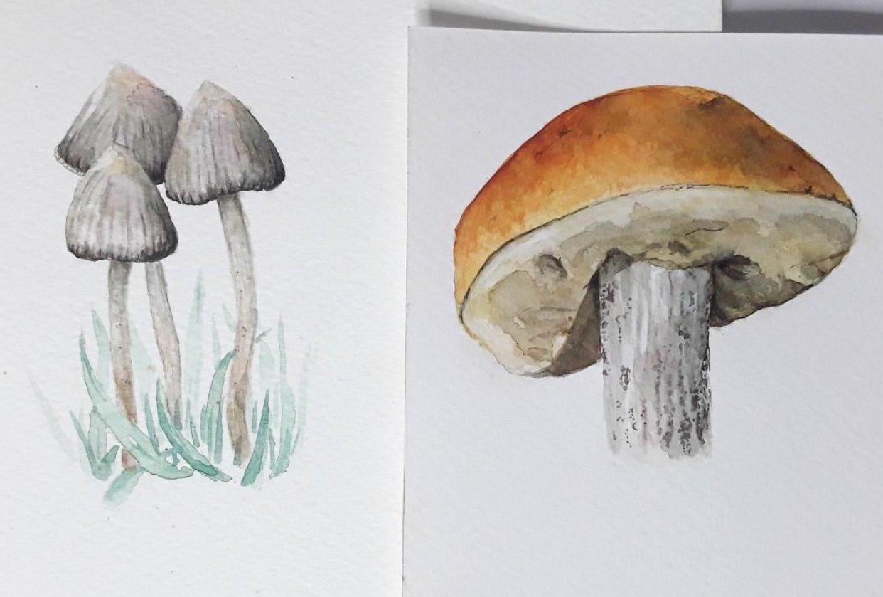 I love mushrooms! - student project