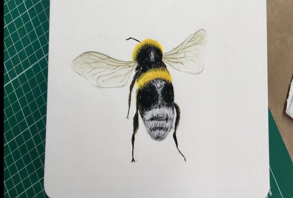 Bumble Bees - student project