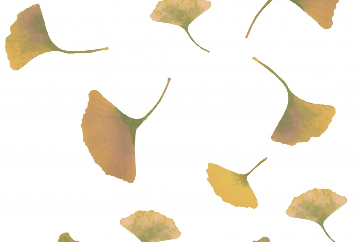 Flying ginkgo - student project