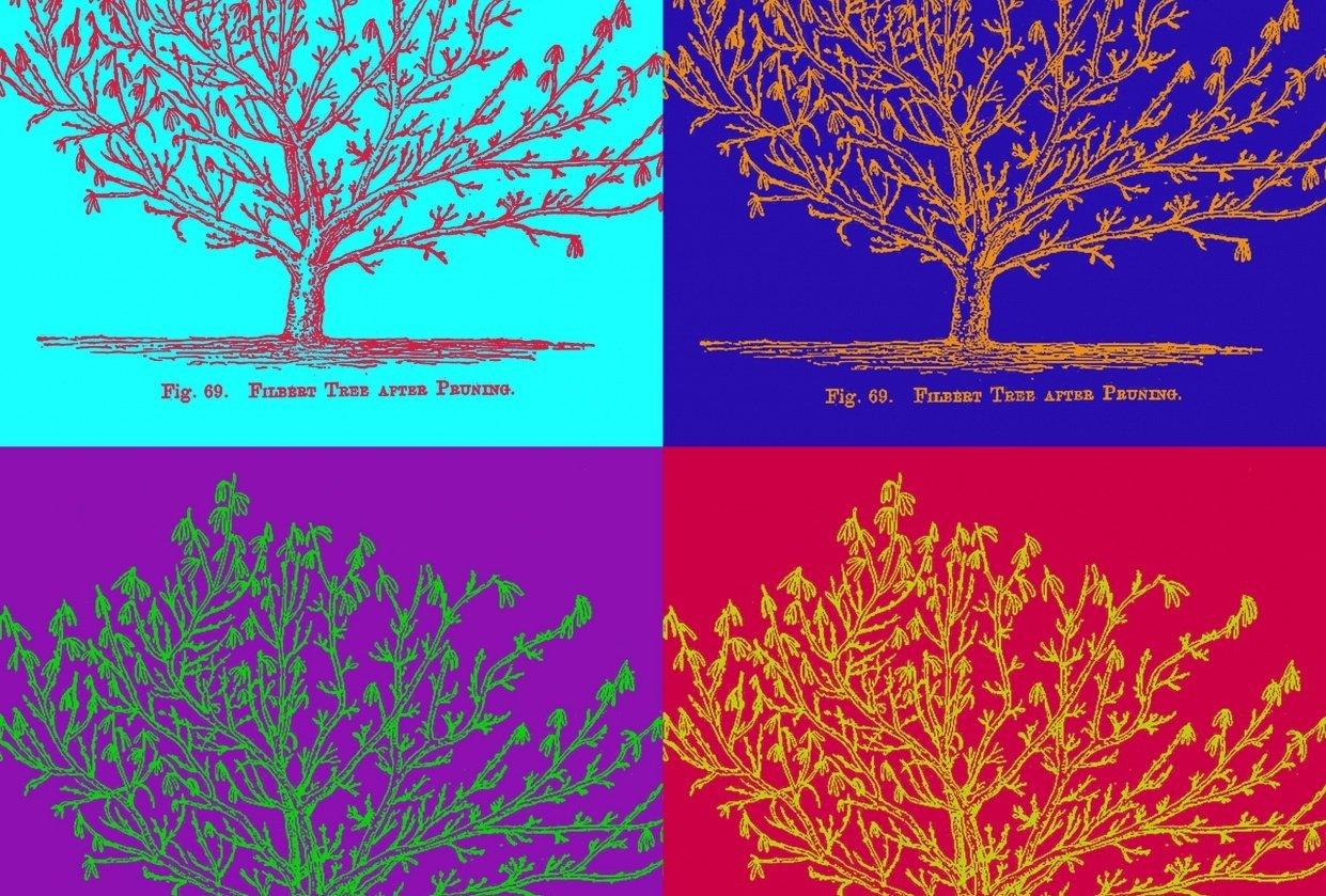 Duotone Vintage Tree Illustration - student project