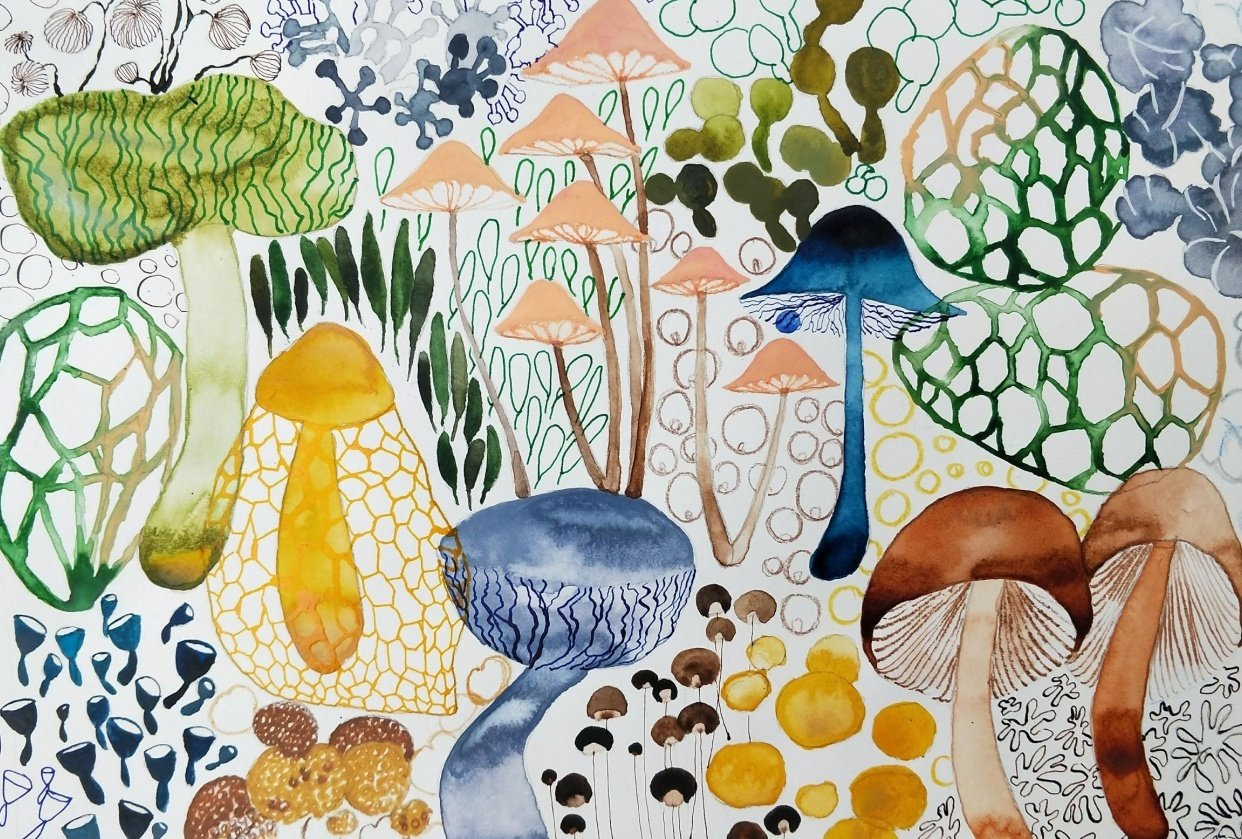 Magical Mushrooms - student project