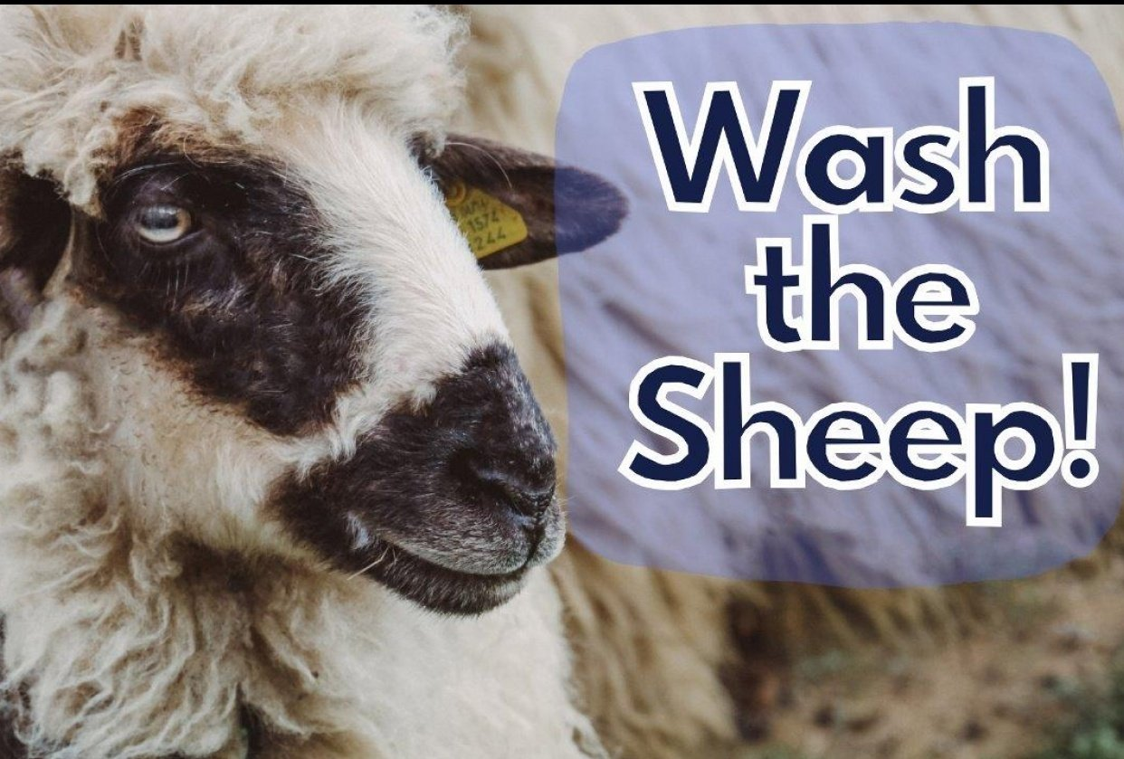 How to Wash Raw Sheep Fleece Thumbnail - student project