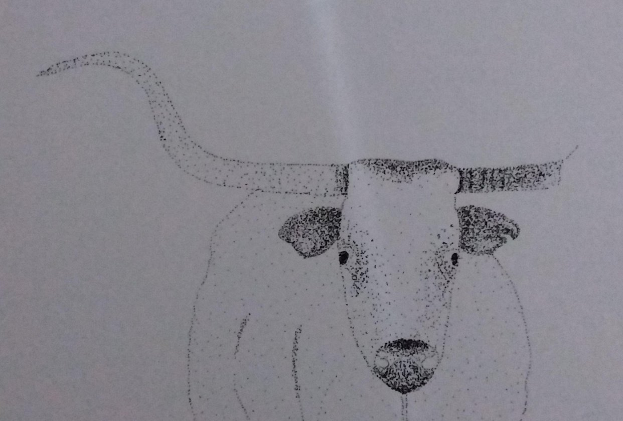Beginning of a longhorn - student project