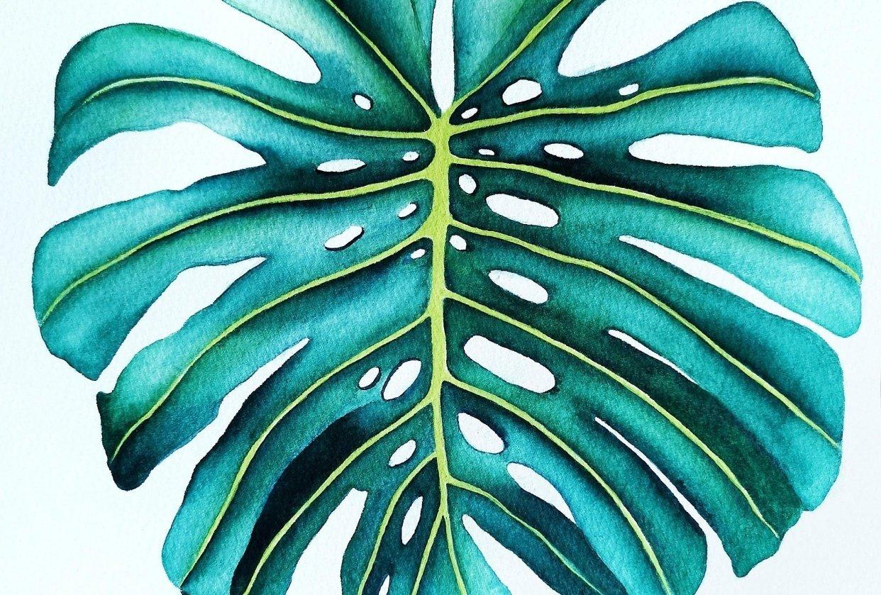Botanical Illustration - Monstera Leaf - student project