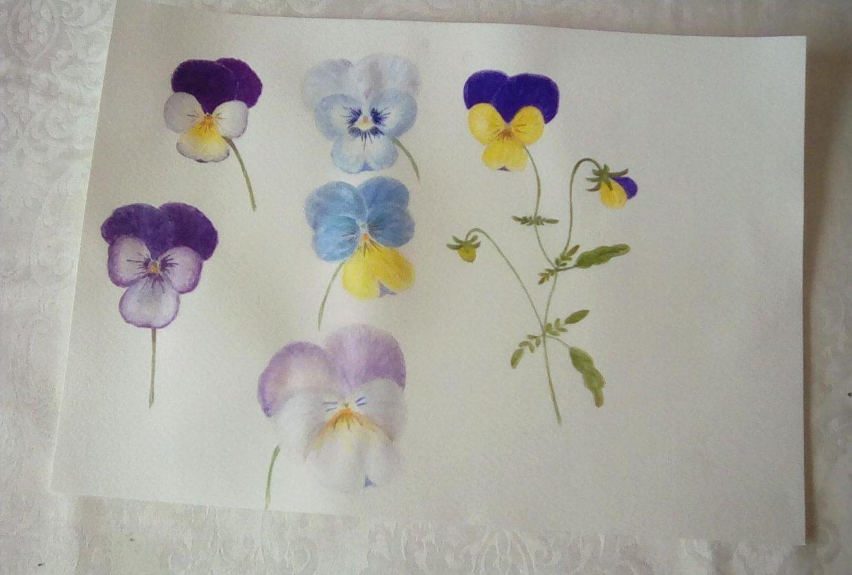 Viola - student project
