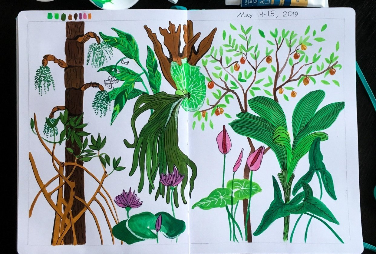 Tropical plants from BBG - student project