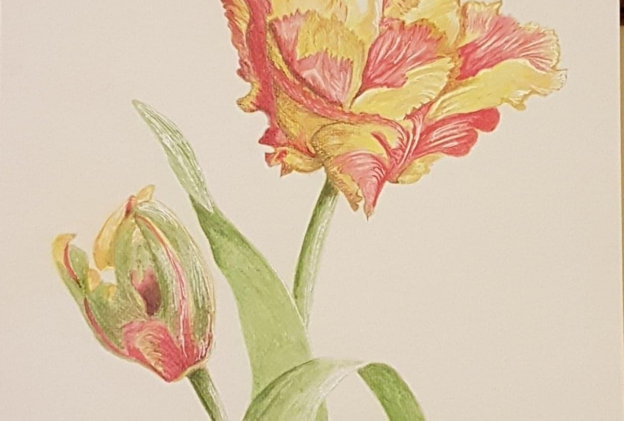 My first mixed media project - Parrot Texas Flame Tulips - student project