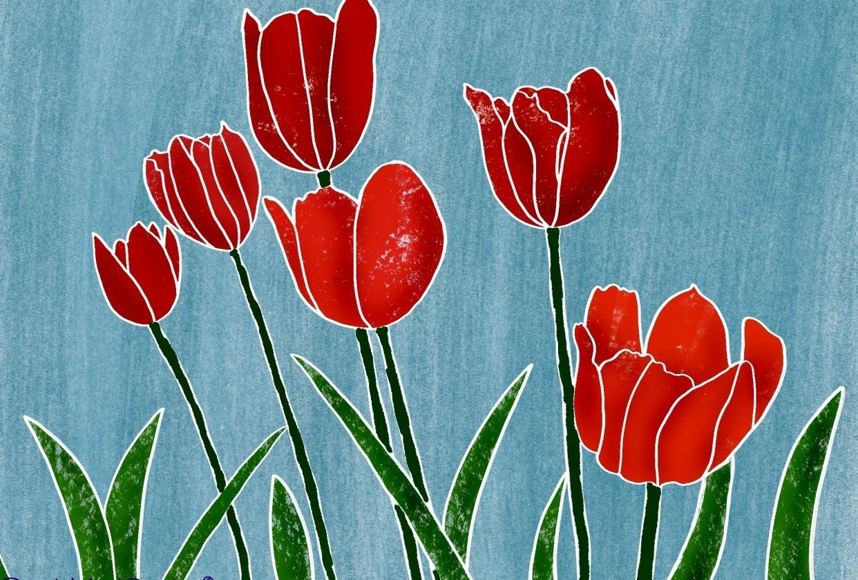My Tulips - student project