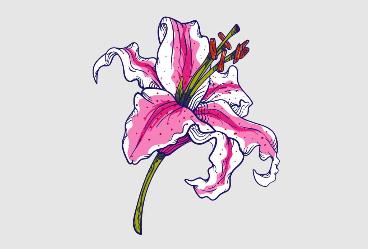 Practice Lily - student project