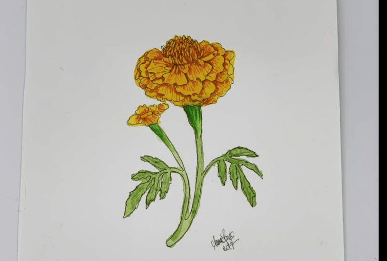 Merry Marigold - student project