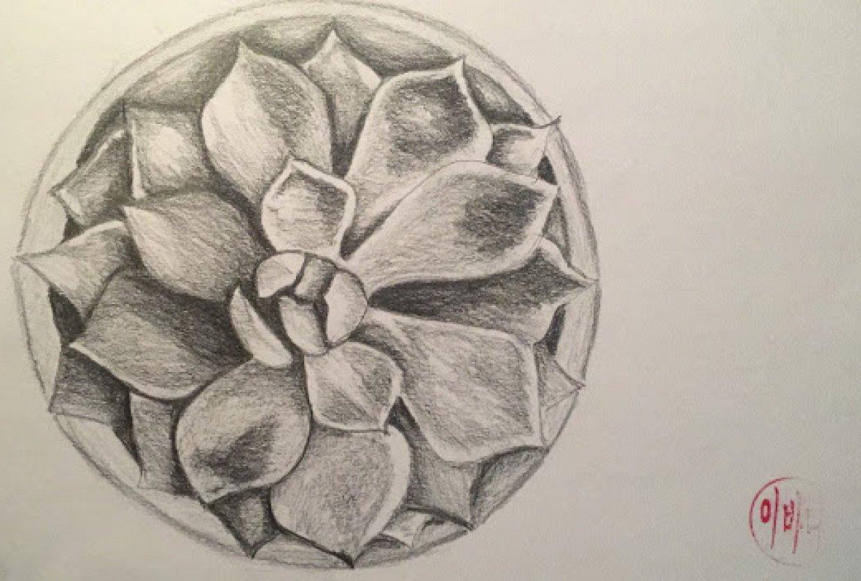 Graphite & Watercolour Succulent - student project
