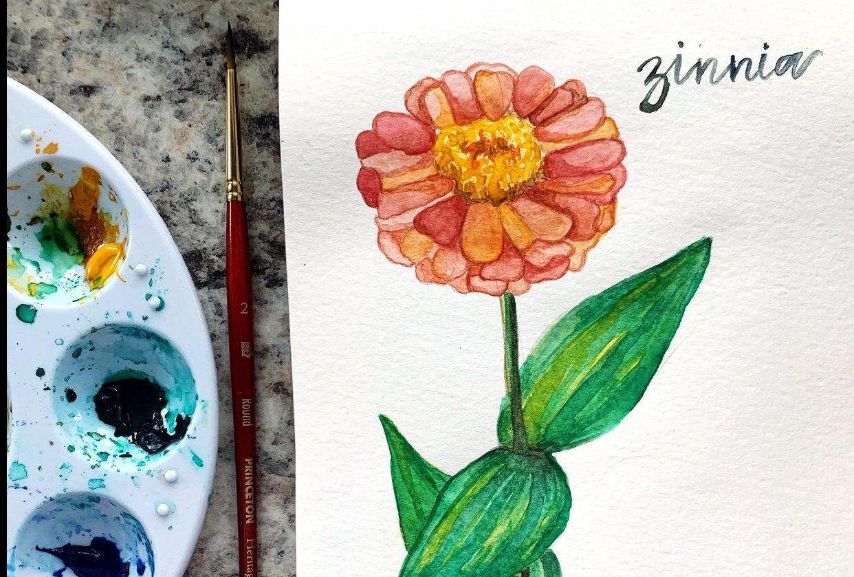 Watercolour Zinnia - student project