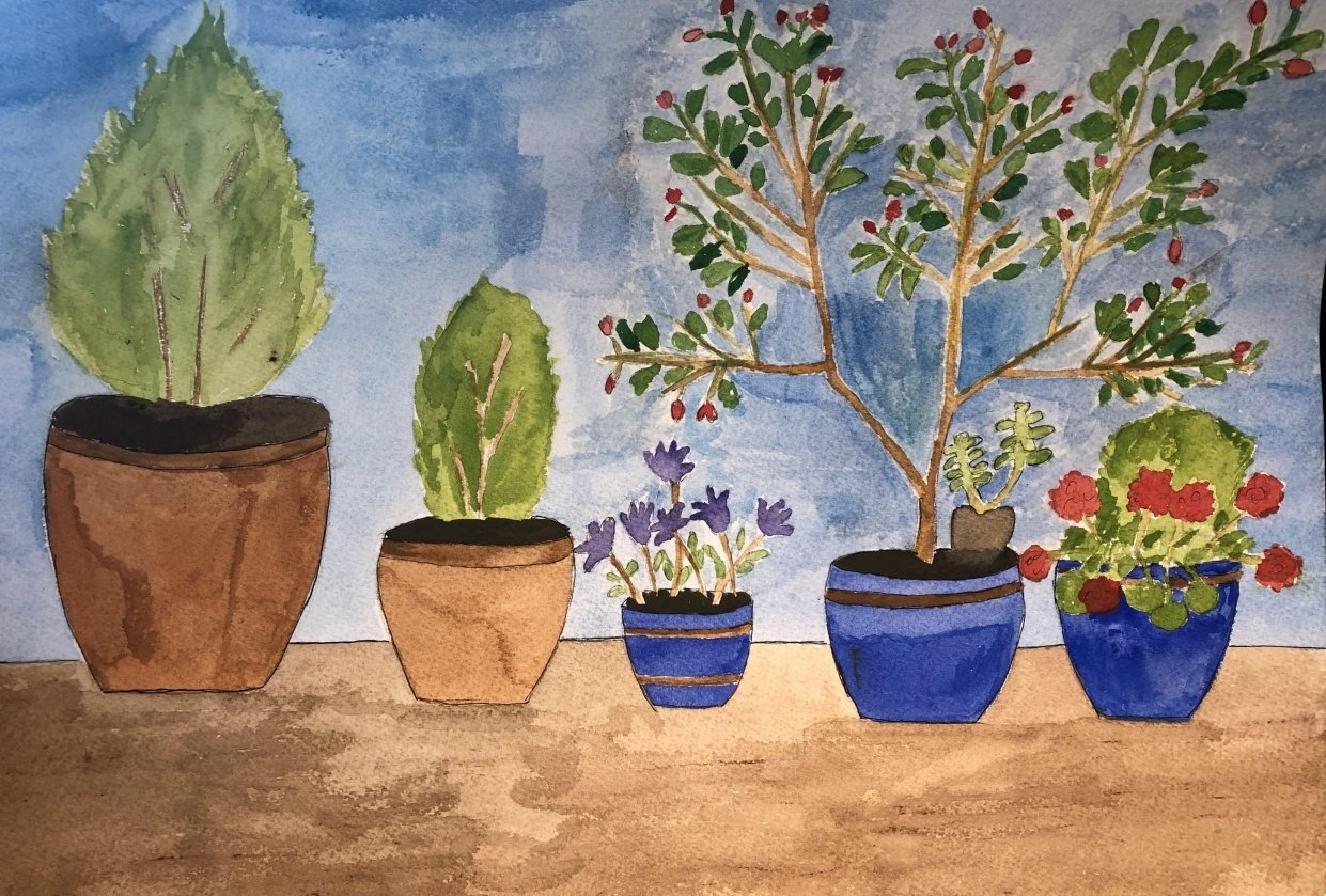 Plants on my patio - student project