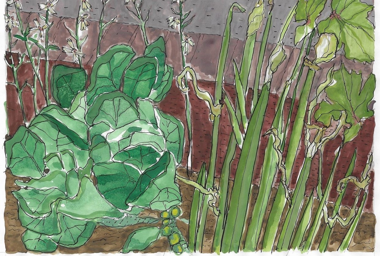 Garden, May 2019 (second illustration, replacing the first) - student project