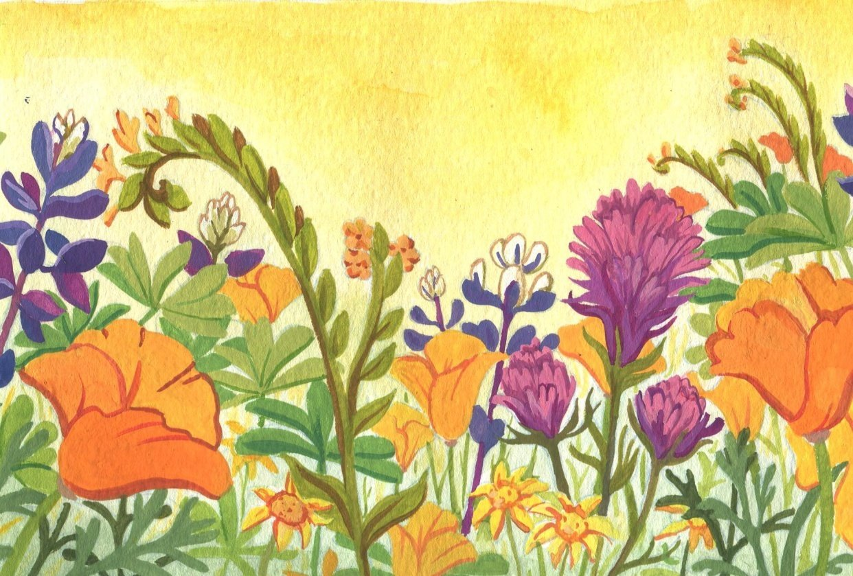 Southern California Wildflowers - student project
