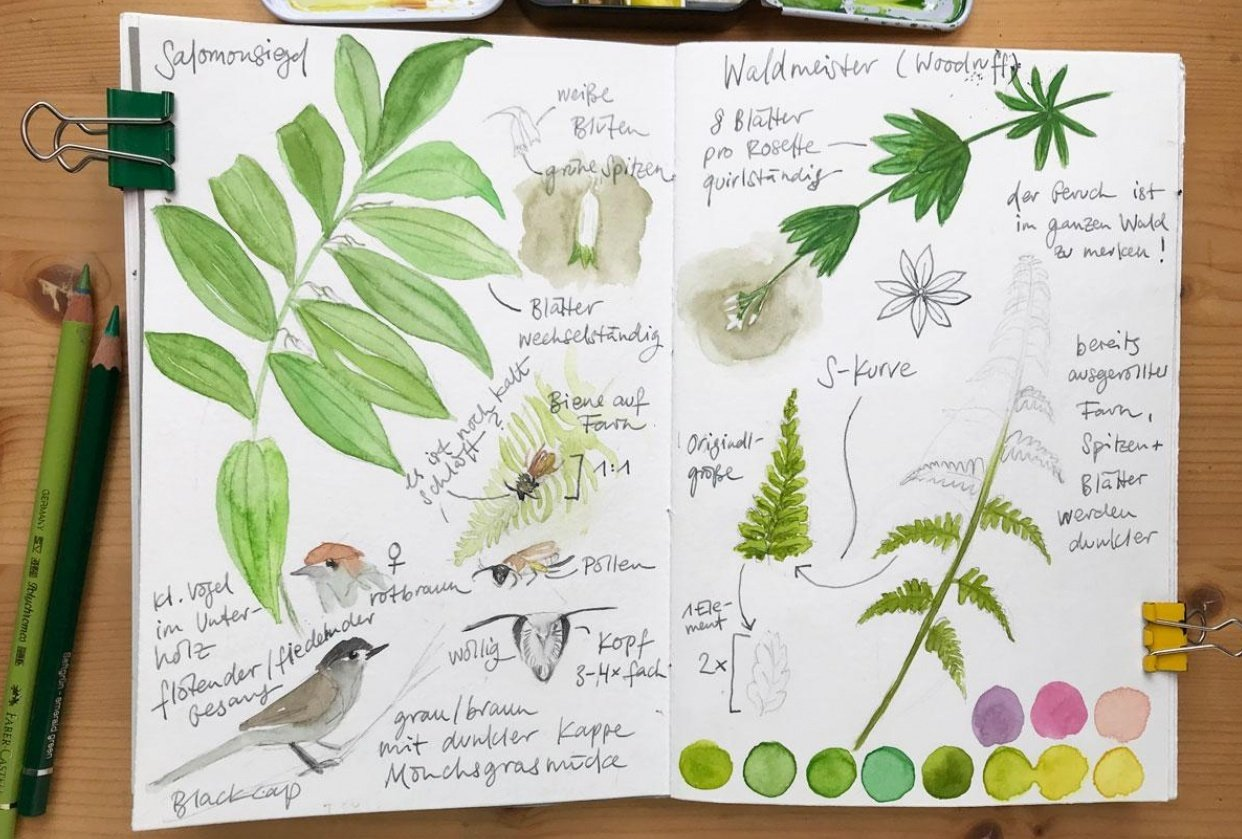 Nature Journaling Ideas For Spring - student project