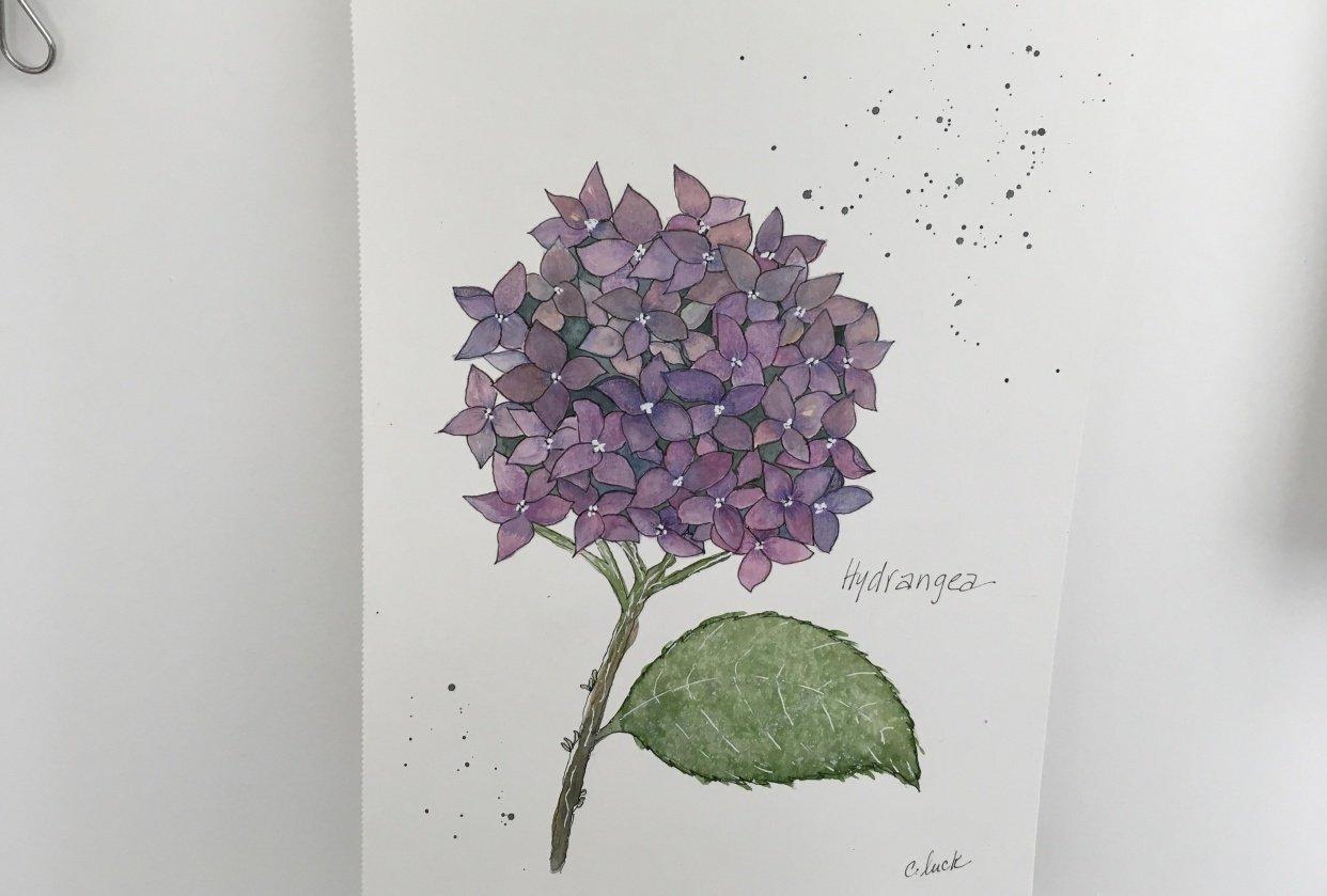 Paint with me vintage botanical illustration - student project