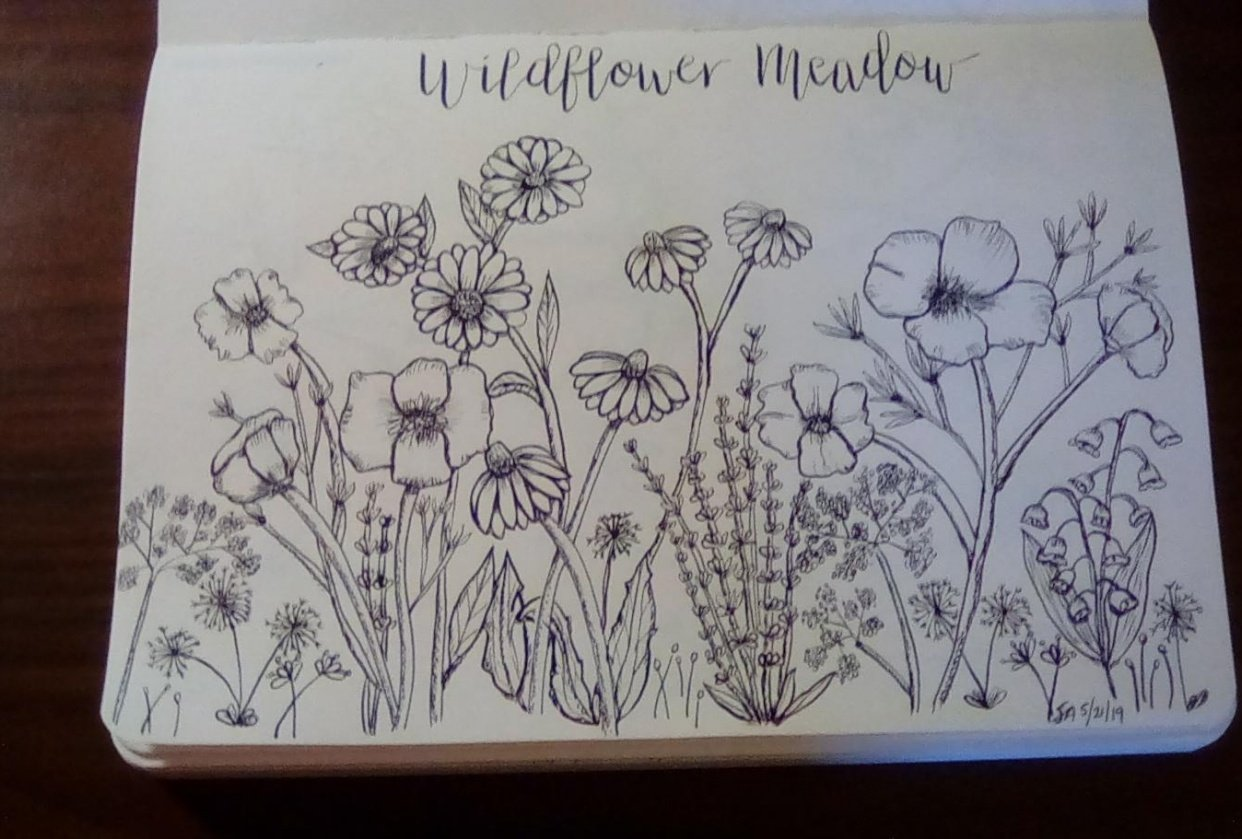 Wildflower practice and meadow - student project