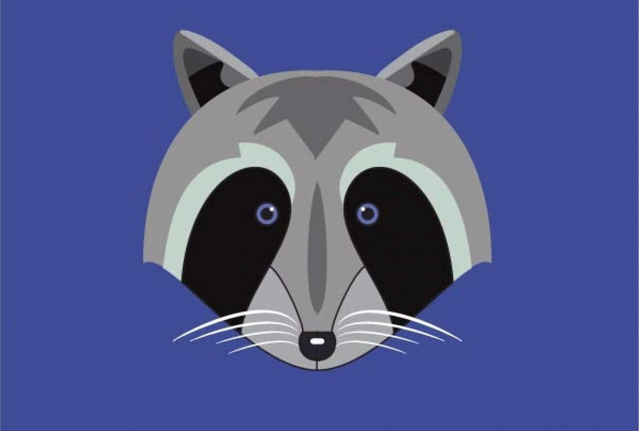 first raccoon - student project