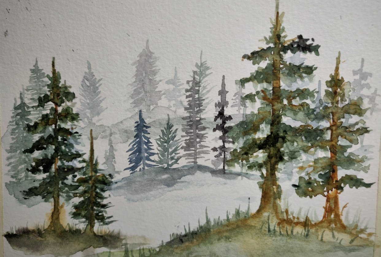 Pine Forest @judiwrites - student project