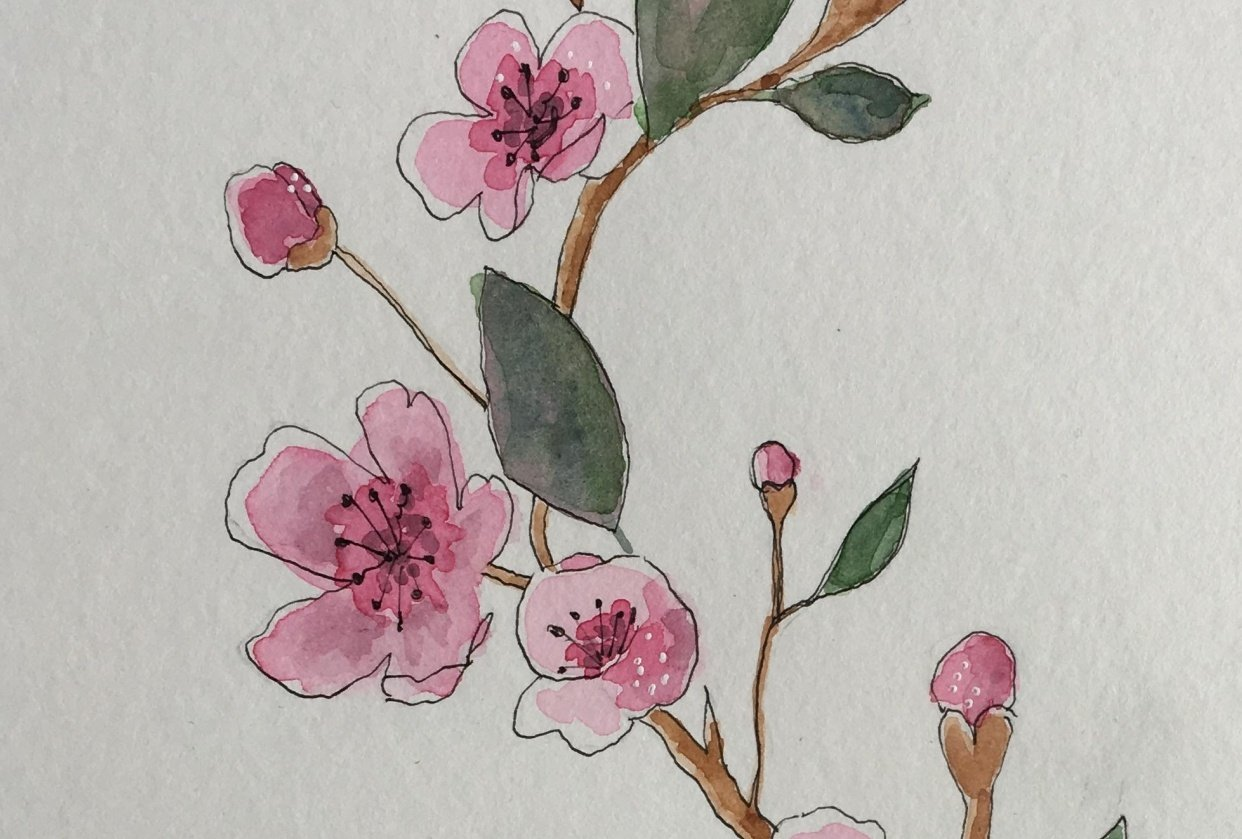 Cherry blossom - what a lovely class this is. - student project