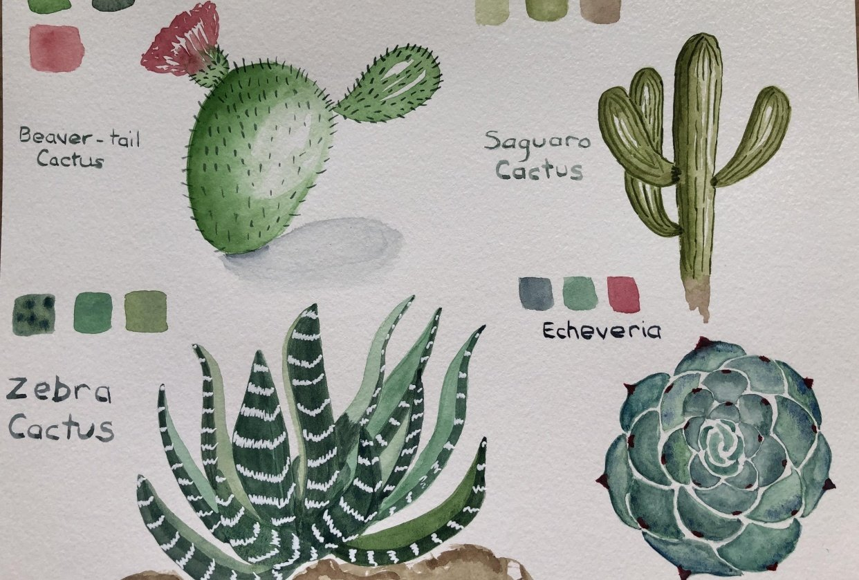 Succulents - 1st Edition - student project