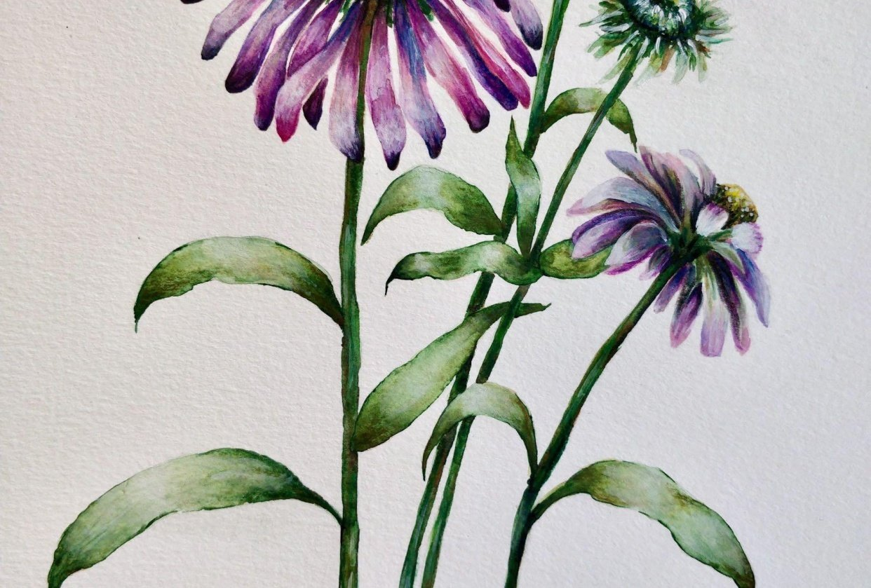 Paint with Me: Vintage-Inspired Botanical Illustration Using Mixed Media - student project