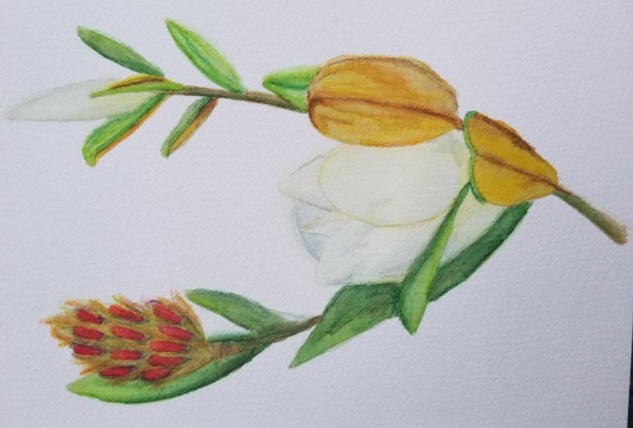 Magnolia - student project