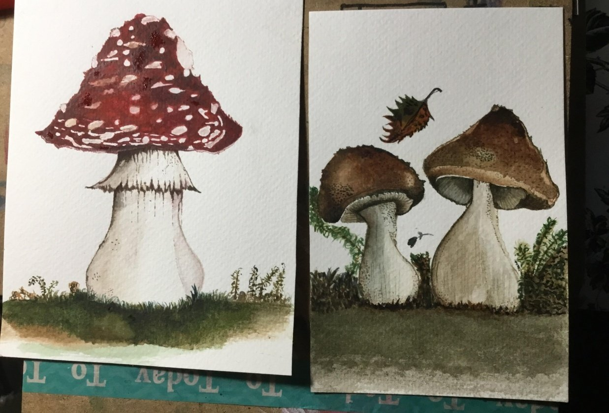 My mushrooms first ones yippee - student project