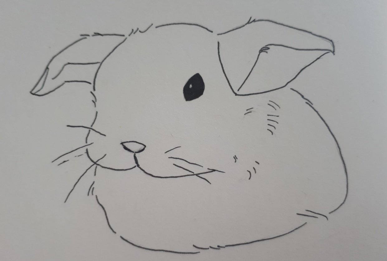 Fluffy bunny and beach landscape - student project