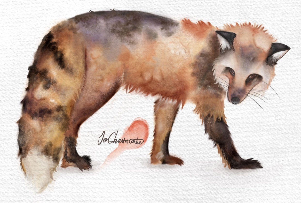 Watercolour Fox (digital brushes in Procreate) - student project