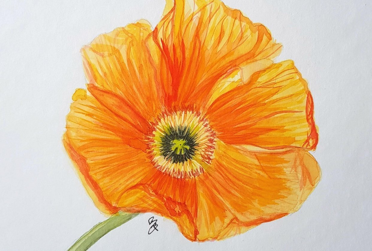Blooming poppy - student project