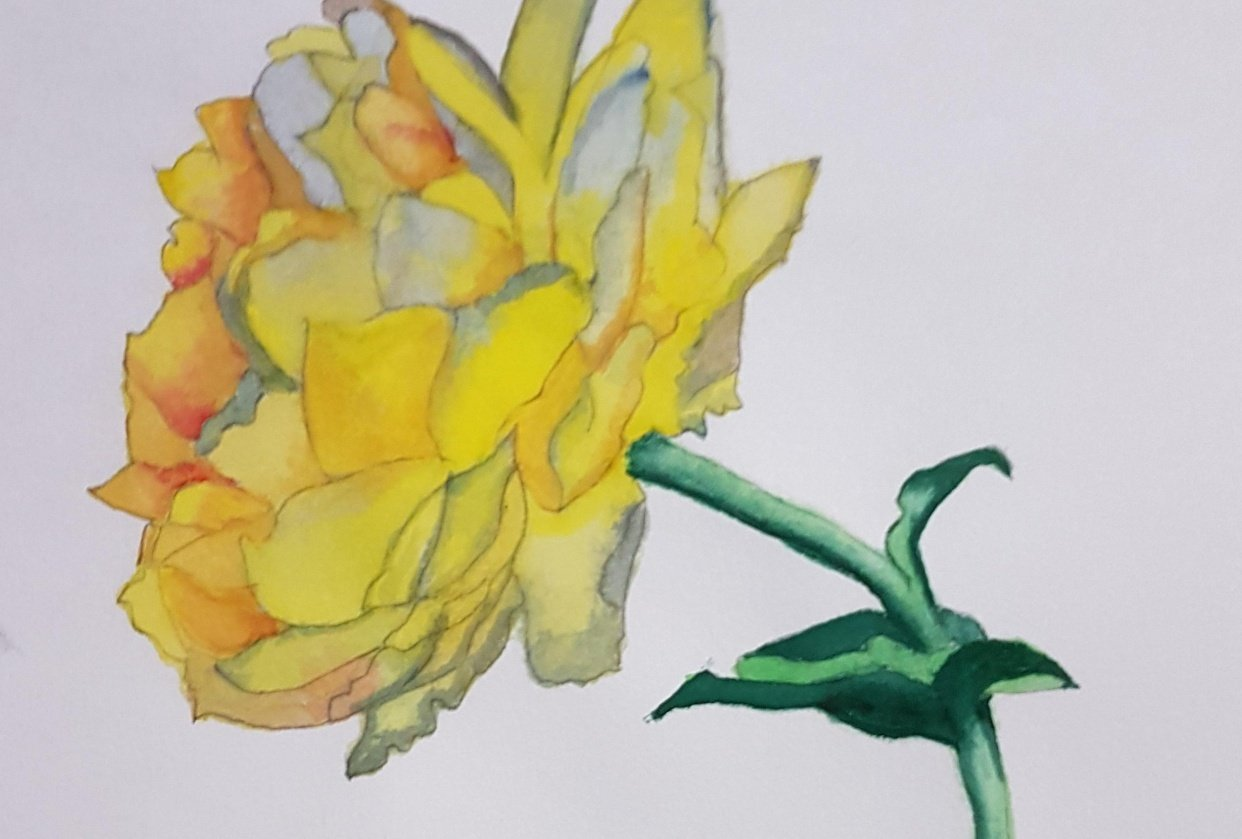 Yellow Rose Painting. - student project