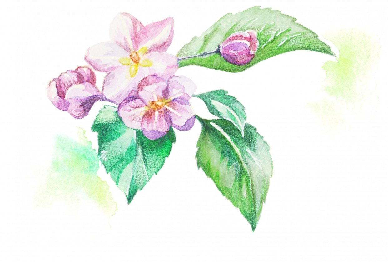 Apple in bloom - student project