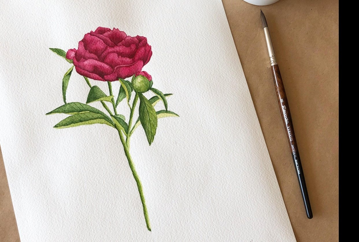 Watercolor peony - student project