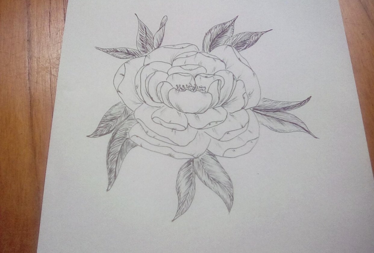Line drawing peony - student project