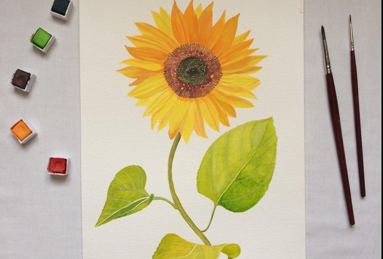 Mixed Midea Vintage-Inspired Botanical Illustration - student project