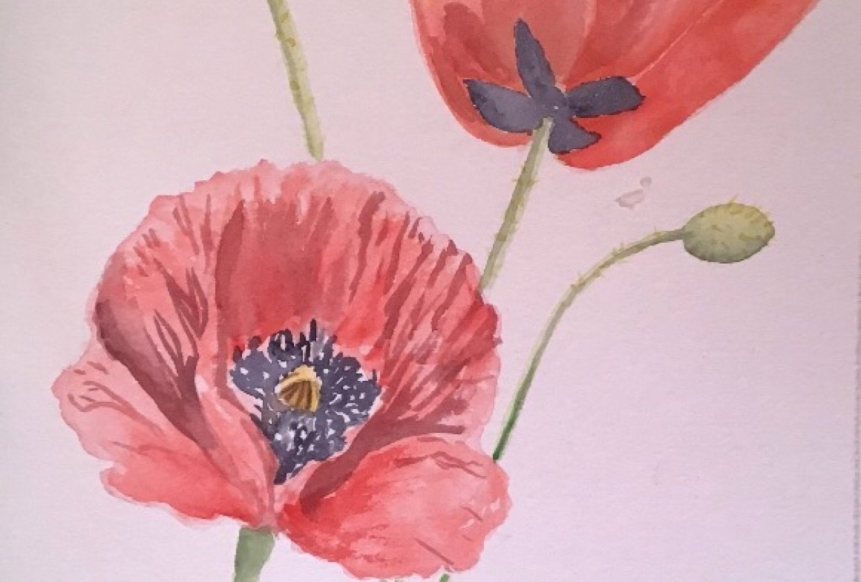Poppies and Dahlias - student project