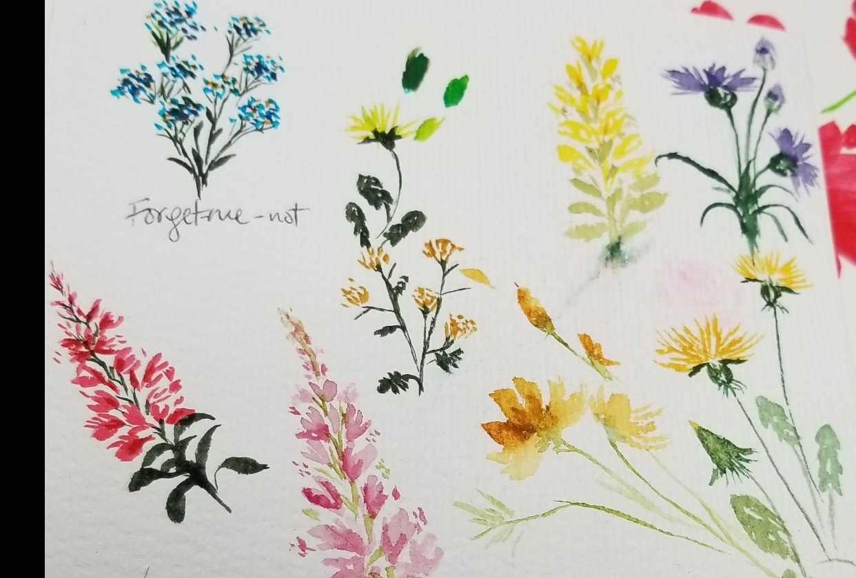Spring Wildflowers - student project