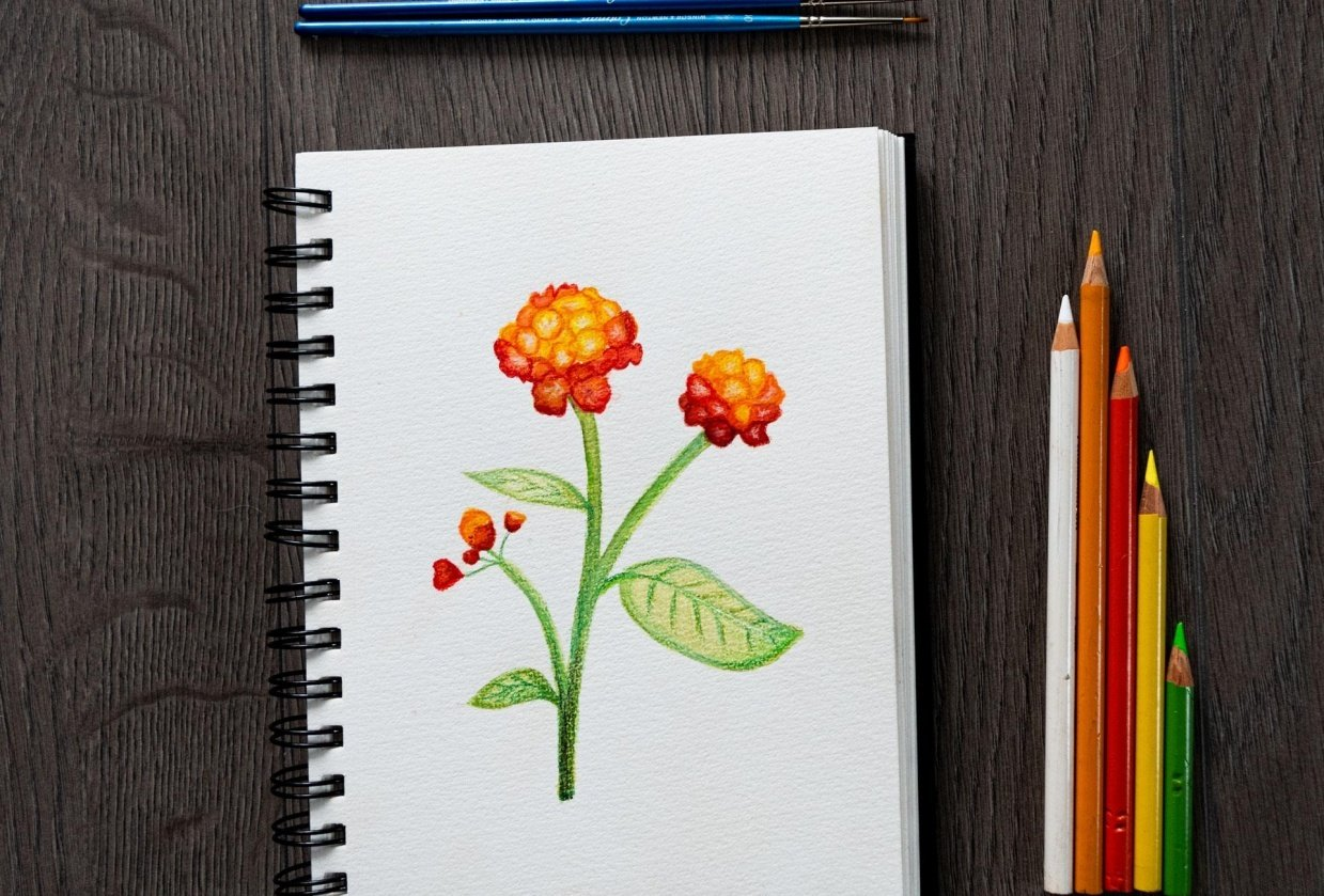 Lantana camara Flower - student project
