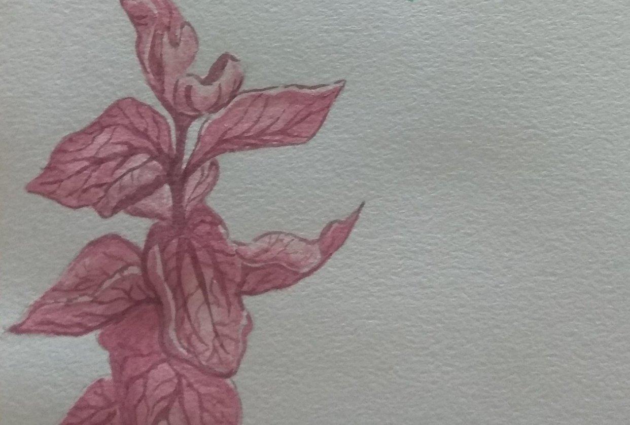 Gouache Flowers - student project