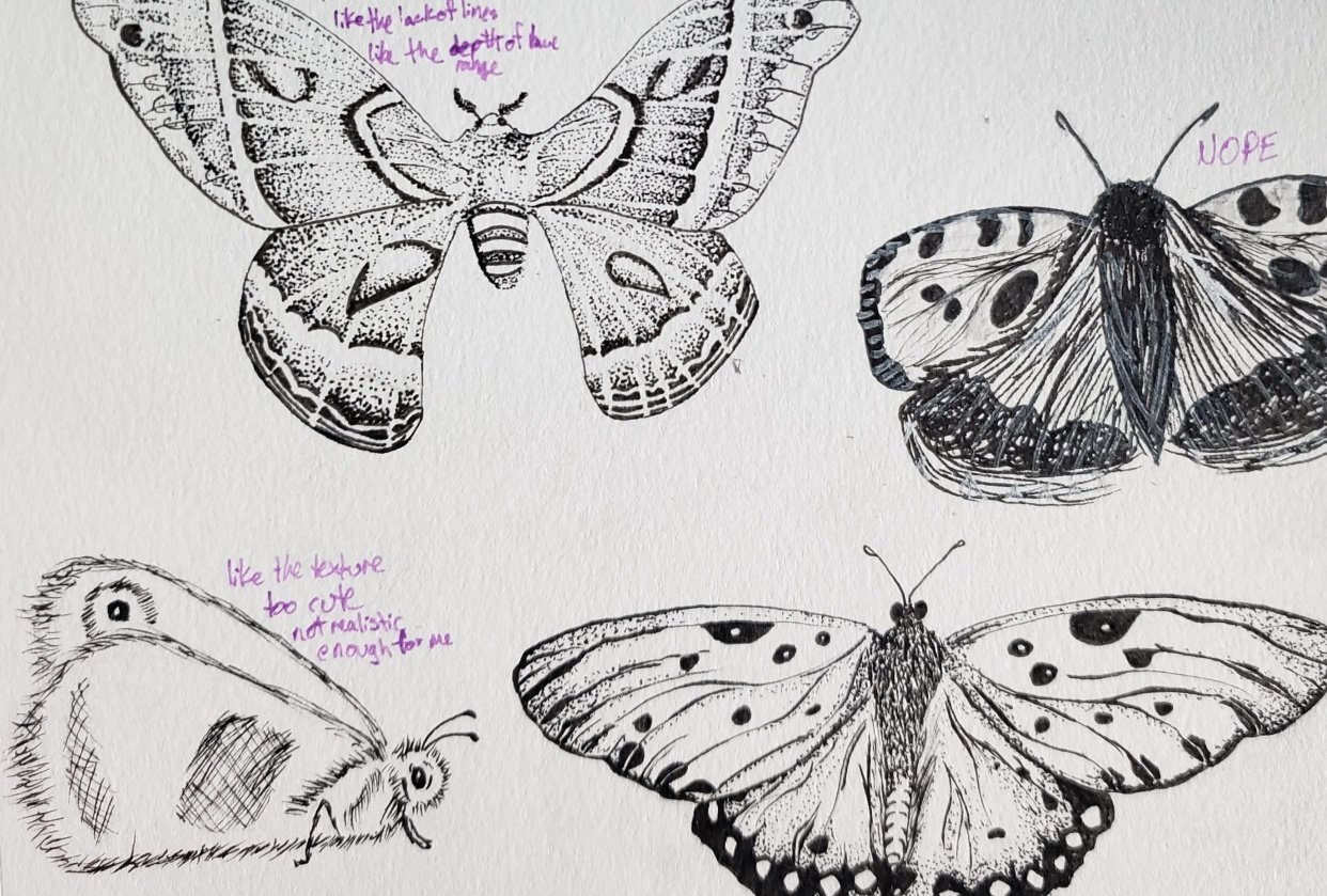 Beetles, Butterflies, and Broken Rules - student project