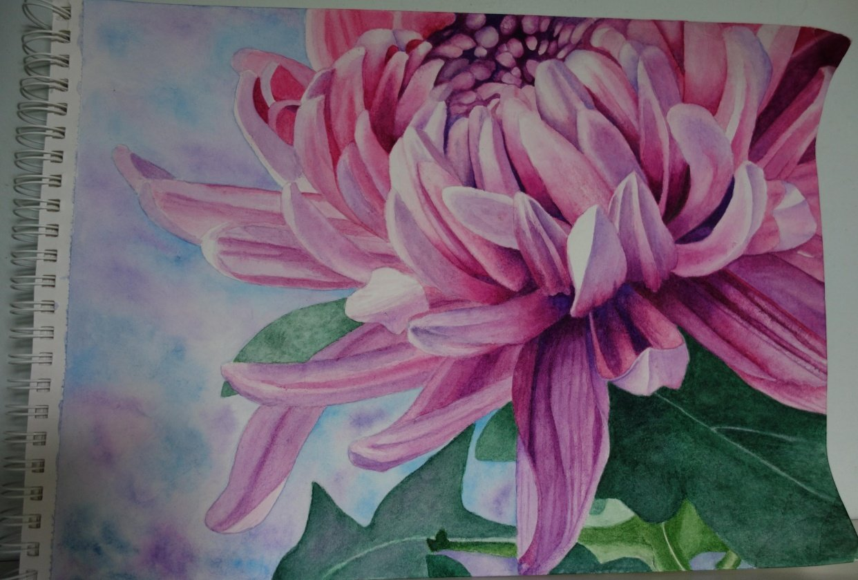Watercolor Chrysanthemum - student project