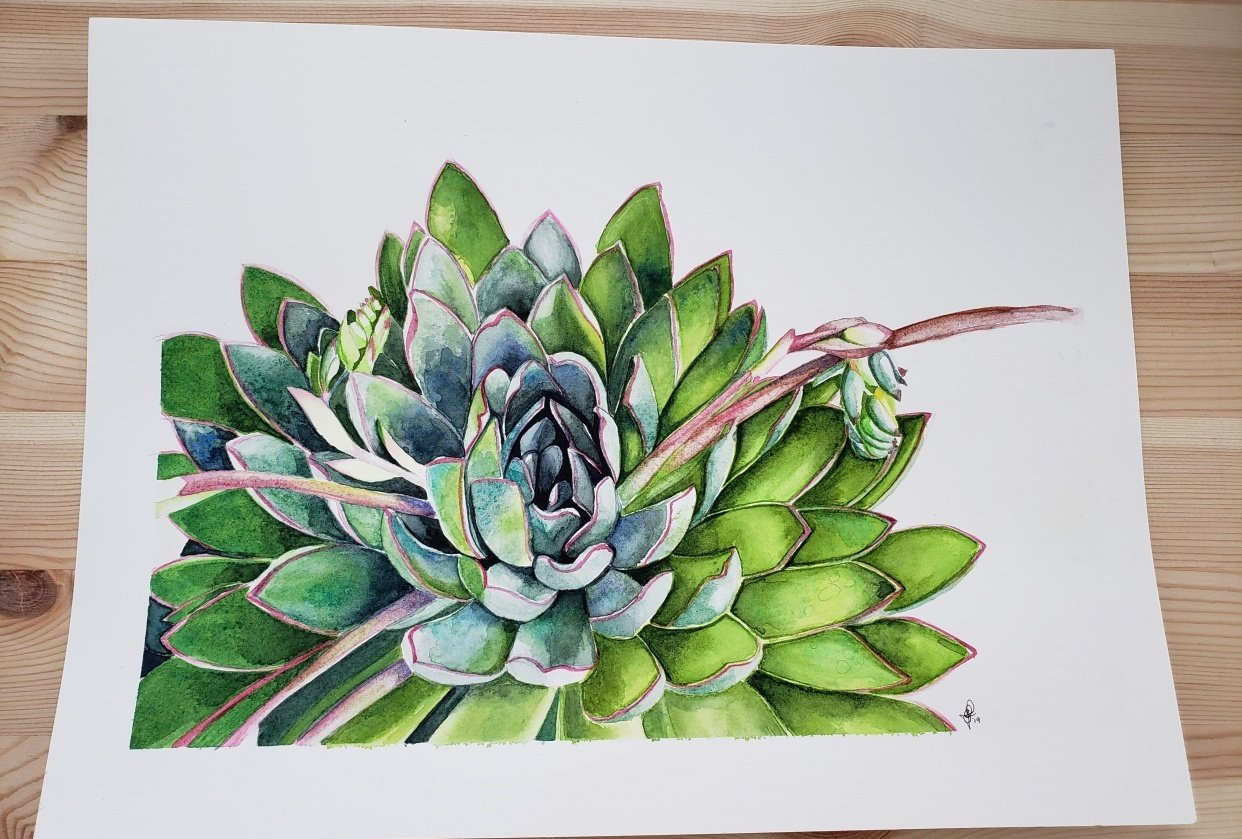 Learn to Paint a Watercolor Succulent with Louise De Masi - student project