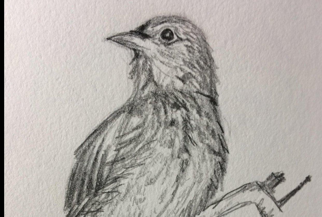 Bluebird - student project
