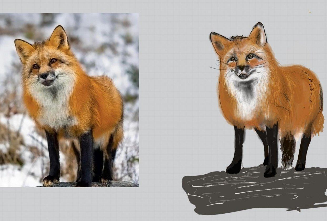 Fox using the Shape Method - student project