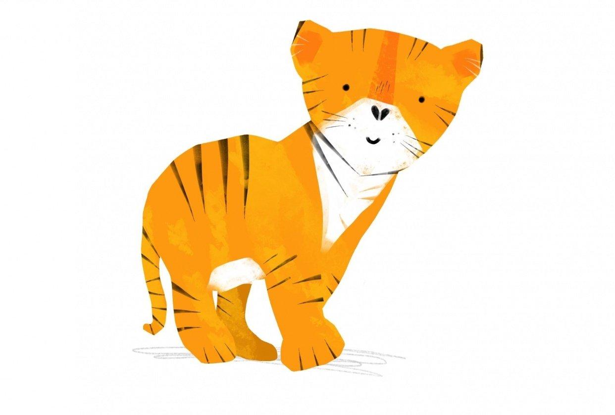Animal Illustrations - student project