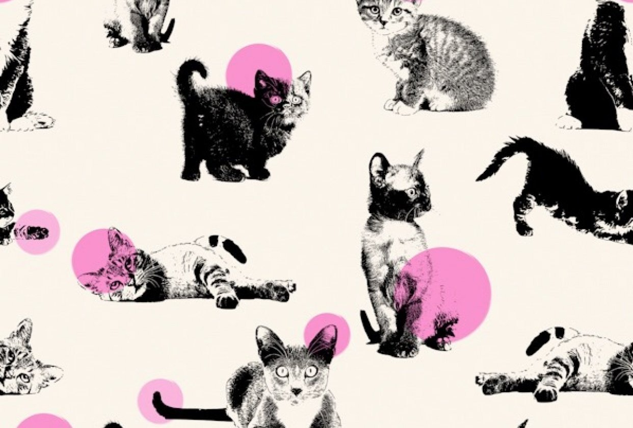 Cats all over! - student project