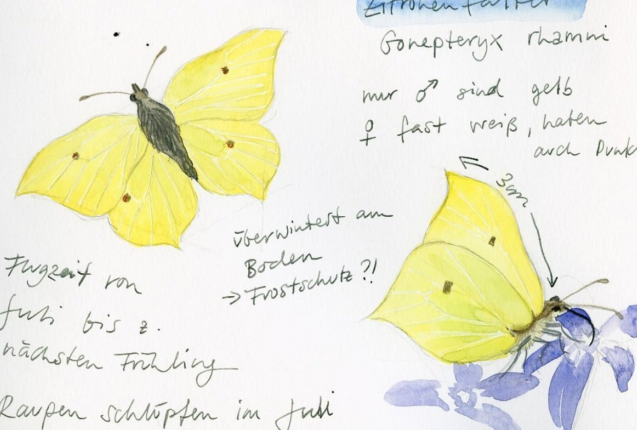 Drawing And Painting Butterflies - student project