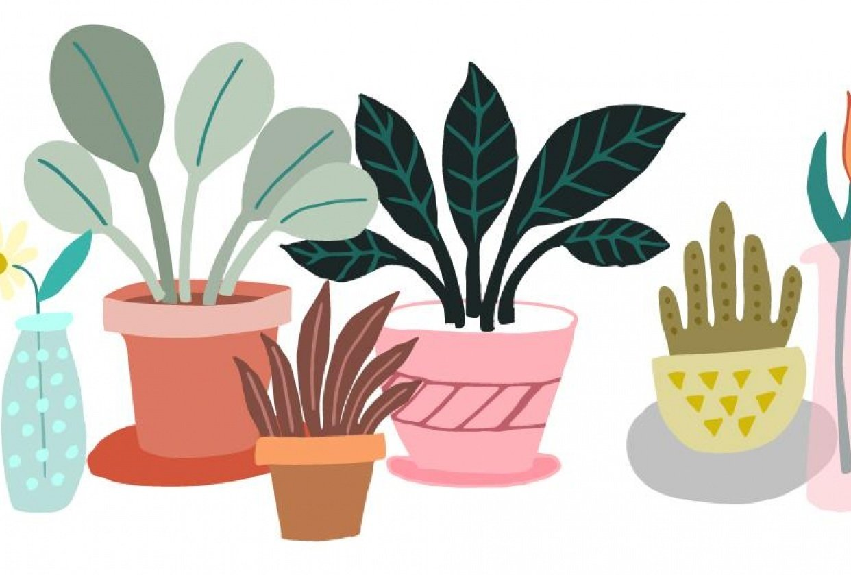 House Plants - student project